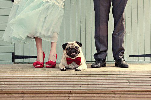 Pet Wedding, un trend fra moda e follia!